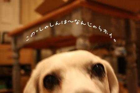 1_20091105174701.jpg