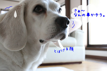 1_20091126141027.jpg