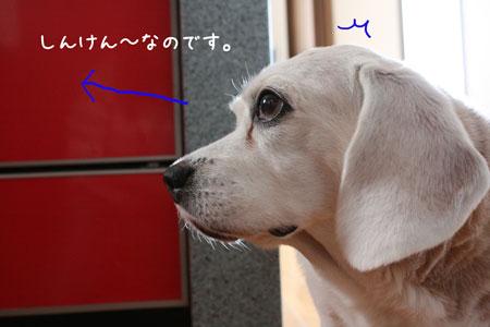 1_20091201163022.jpg