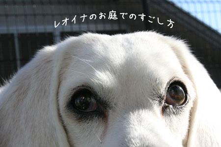 1_20091202152437.jpg