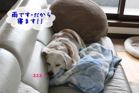 1_20091203145806.jpg
