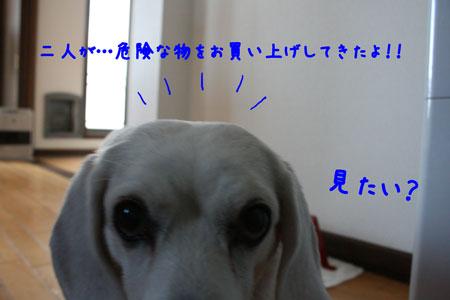 1_20091204181002.jpg