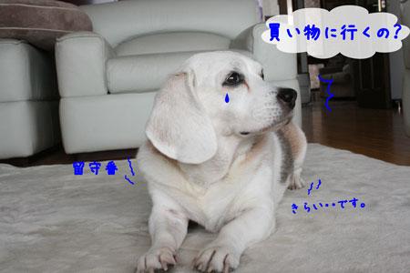1_20091205145552.jpg