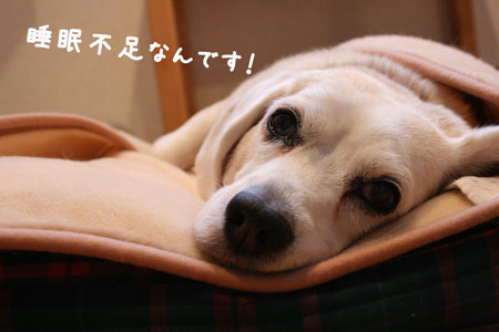 1_20091211134606.jpg