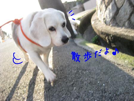 1_20091214160845.jpg