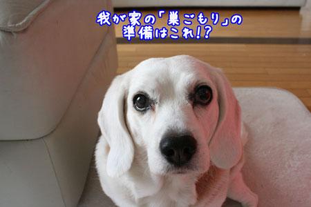 1_20091217175709.jpg