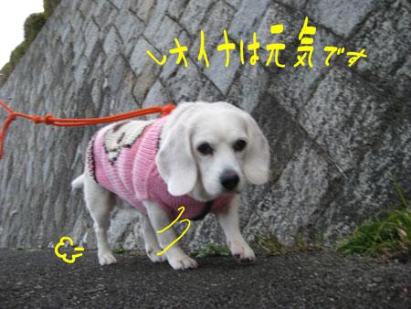 1_20091220232157.jpg
