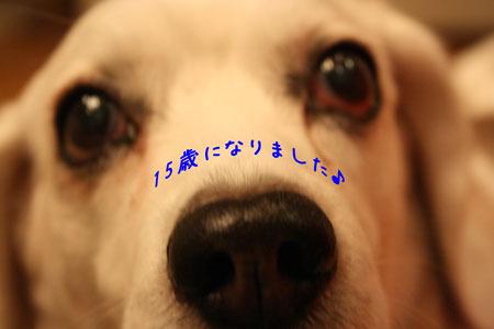 1_20100105211633.jpg