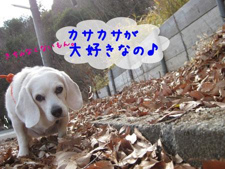 1_20100109162330.jpg