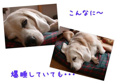 1_20100113164048.jpg