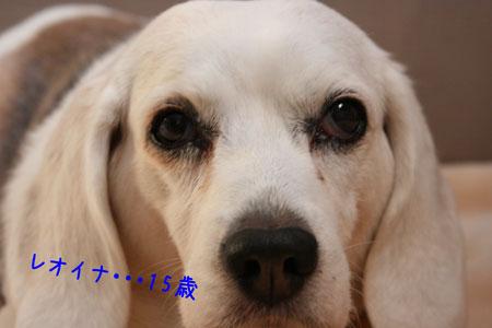 1_20100114160501.jpg