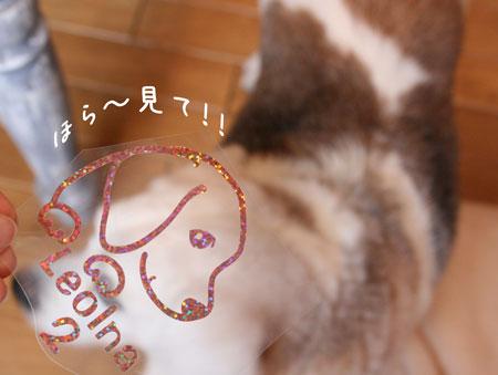 1_20100121152325.jpg
