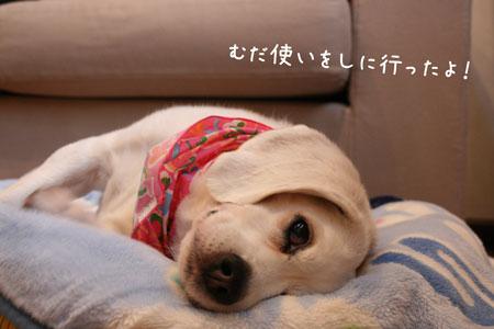 1_20100207174746.jpg