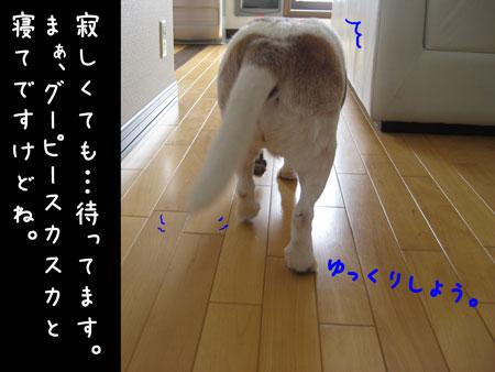 1_20100216180005.jpg