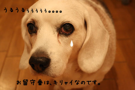 1_20100217183209.jpg