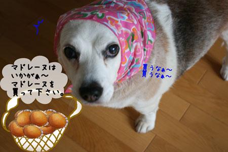 1_20100325155927.jpg