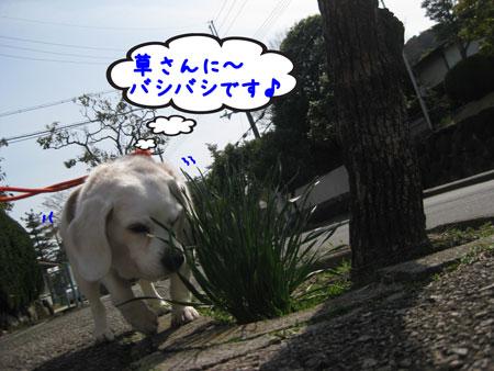 1_20100331165346.jpg