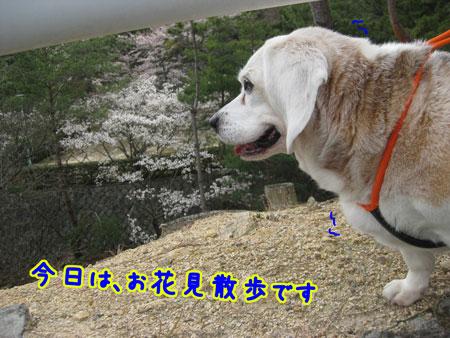 1_20100405164147.jpg