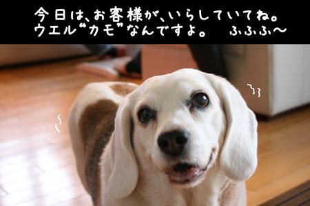 1_20100407160531.jpg