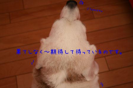 1_20100409161407.jpg