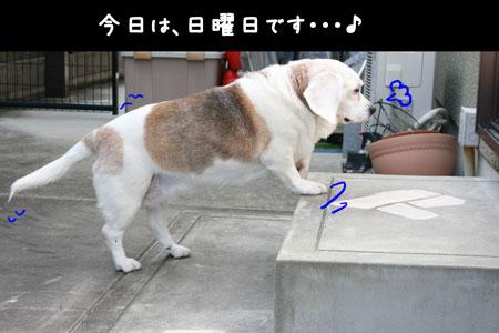 1_20100411204637.jpg
