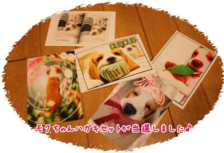 1_20100415214151.jpg