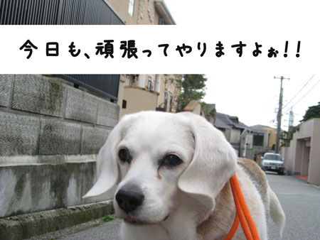 1_20100417164909.jpg