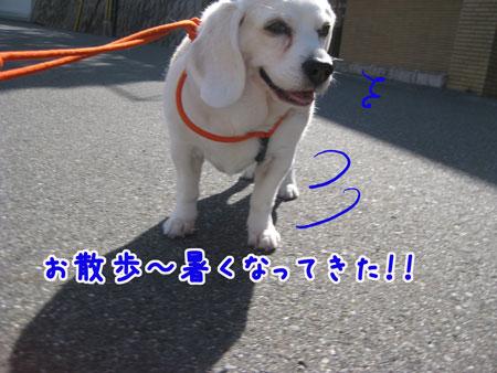 1_20100421161252.jpg