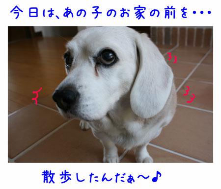 1_20100426173632.jpg