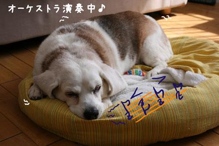 1_20100429000915.jpg