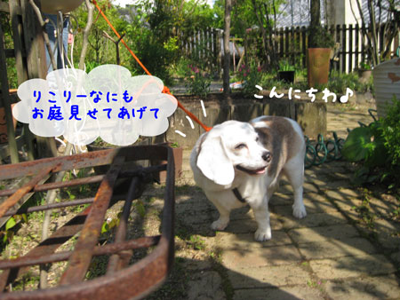1_20100501213701.jpg
