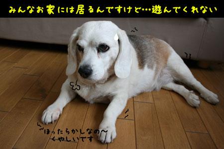 1_20100504173801.jpg