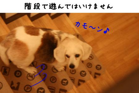 1_20100511113354.jpg