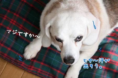 1_20100519155941.jpg