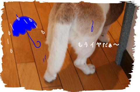 1_20100524141259.jpg