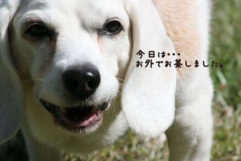 1_20100529153449.jpg