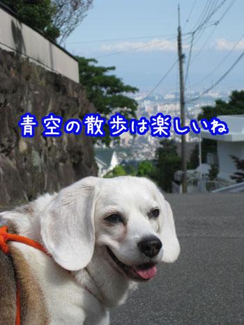 1_20100531164726.jpg