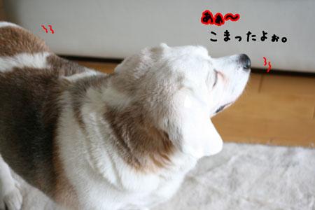 1_20100601150111.jpg