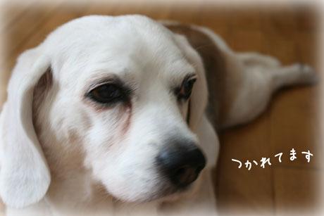 1_20100604140927.jpg
