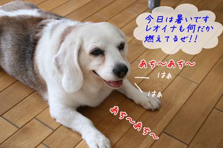 1_20100611154341.jpg