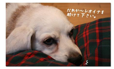 1_20100618155523.jpg