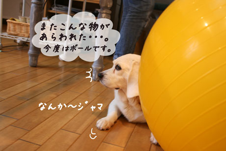 1_20100626153236.jpg