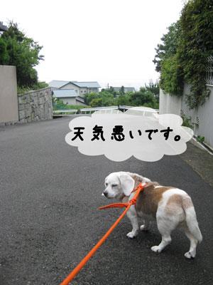 1_20100627143334.jpg