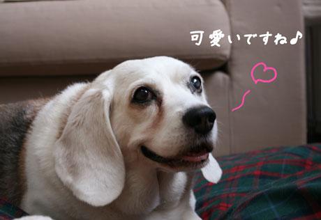 1_20100629112602.jpg