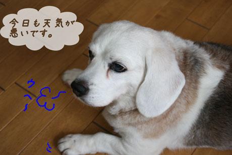 1_20100702160513.jpg