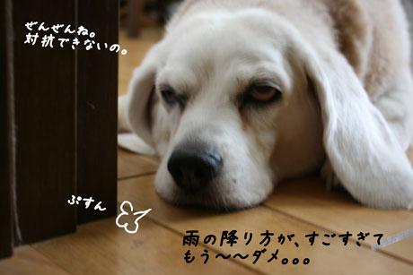 1_20100703143719.jpg