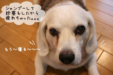 1_20100709152119.jpg