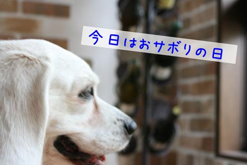 1_20100710205328.jpg