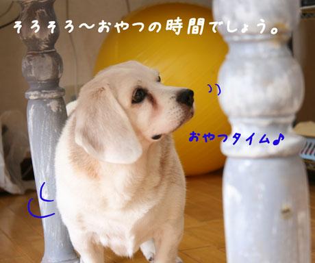 1_20100712154236.jpg