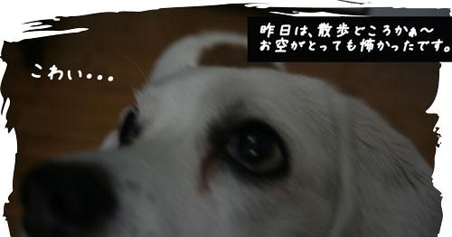 1_20100715142522.jpg
